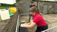 Samara Radcliffe has won more than 120 rosettes for her very unusual hobby - showing pigs.