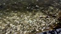 Thousands of dying and dead fish were found in a river leading to the Gulf of Mexico.