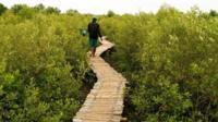 越南湄公河三角洲(图片来源:Harald Franzen/©GIZ)