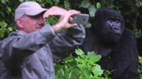 Tourist and gorilla