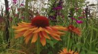 Flower at Hampton Court Palace Flower Show