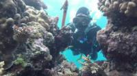 Diver at the Great Barrier Reef