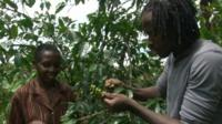 Roberts Mbabzi selecting coffee beans