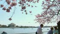 Cherry blossom by the lake in Washington DC