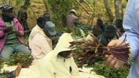 Khat farmers