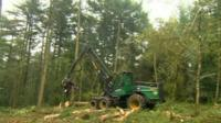 Trees felled in Wentwood Forest