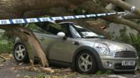 Car hit by tree