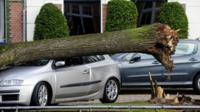A tree that has fallen on a car in Amsterdam