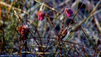 Flowers in a peat bog