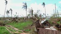 A coconut plantation lying in ruin