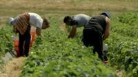 Workers in a field