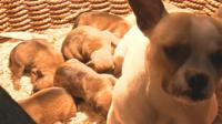 Puppies seized in police raids in County Durham