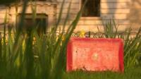 Red briefcase in the grass
