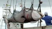 A minke whale unloaded at a port in Kushiro