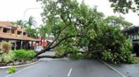 A fallen tree is seen laying across a road