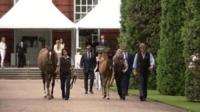 Son of Frankel and his dam, Crystal Gaze