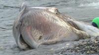 Minke whale found dead on Manx beach