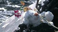 Soft toy among MH17 wreckage in Ukraine