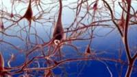 Brain nerve synapse