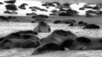 Thermal image of Blakeney Point seal colony