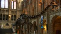 The Natural History Museum's long-time entrance hall exhibit of a Diplodocus dinosaur