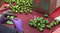 Betel nut preparation