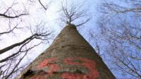 Tree in Raglan