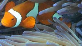 Fish swimming through coral