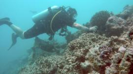 A diver inspects coral