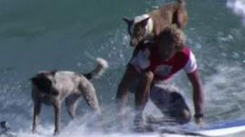 Chris and his dogs surfing