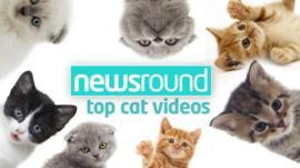 Newsround's top cat videos