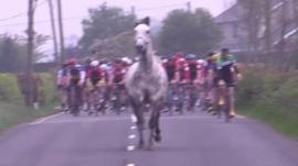 Horse runs in front of cyclists