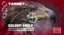 Graphic showing eagle in target
