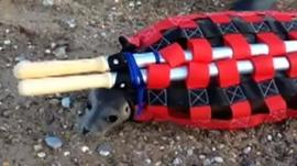 Seal in a special carrying stretcher