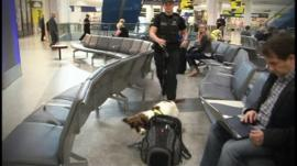 Police sniffer dog at Gatwick Airport