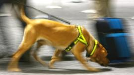 Sniffer dog near a suitcase