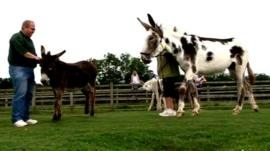 Miss Ellie the donkey in field at animal sanctuary