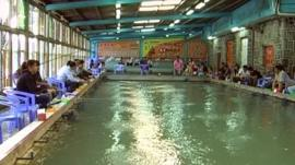 Shrimp pool