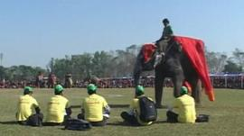 Elephant at contest