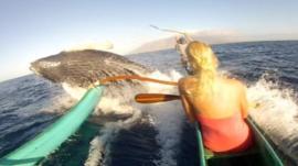 Humpback whale surfacing under canoe's prow