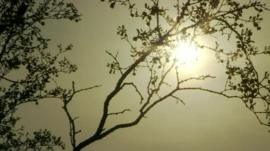 Sun shining down on sparsely leafed tree