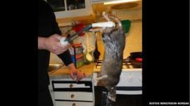 Rat caught in the home of the Korsas family in Stockholm, Sweden