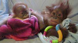 Baby Reike and Bulu Mata wrapped up in blankets