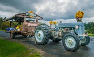 Un tractor con girasoles