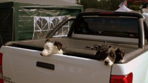 Dogs in the back of a truck