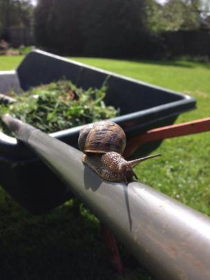 Snail on a wheelbarrow