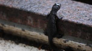 Newt on a step