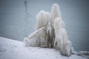 A frozen plant