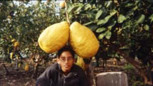 Giant Lemons