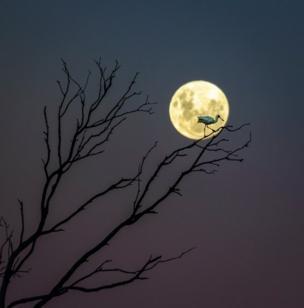 Titulo da foto: A Fork, a Spoon and a Moon